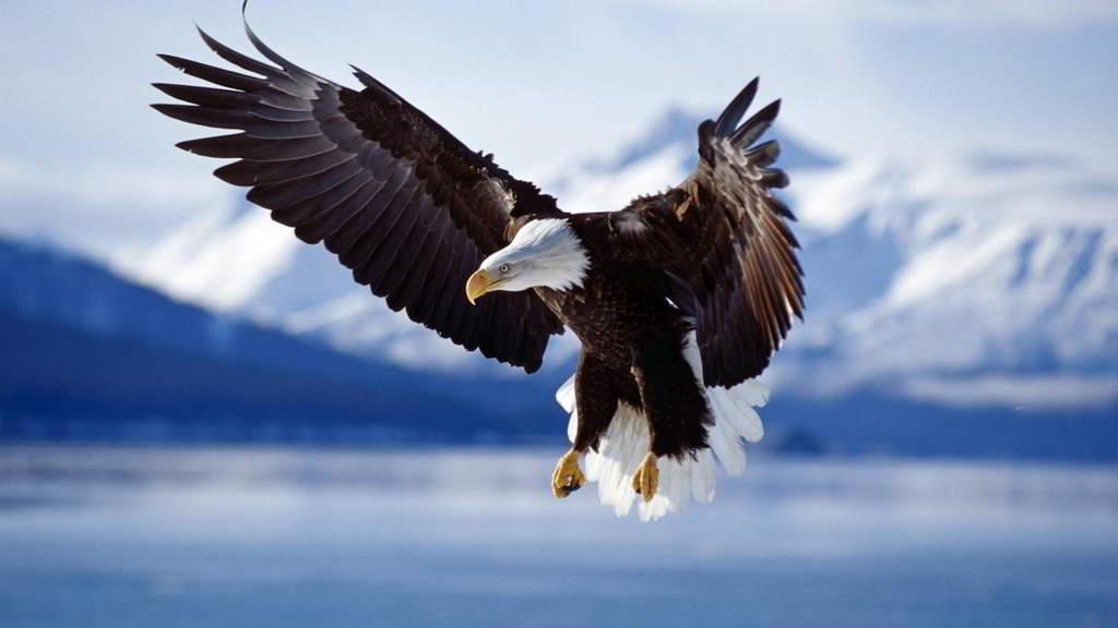 Una Dichiarazione di Libertà